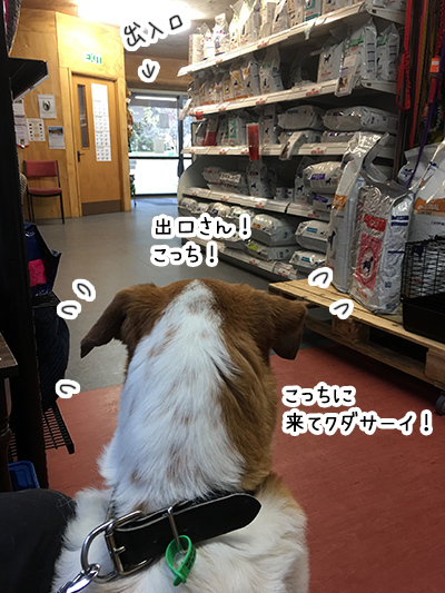 21062018_dog3.jpg