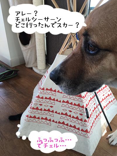 21072018_dog1.jpg
