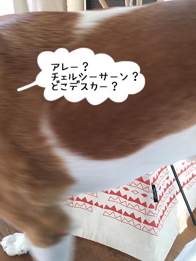 21072018_dog3.jpg
