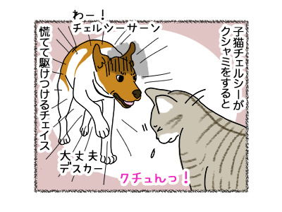 25062018_dog1.jpg