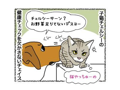 25062018_dog2.jpg