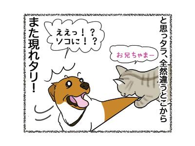 25072018_dog3.jpg