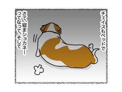 26062018_dog2.jpg