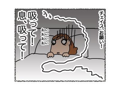 26062018_dog5.jpg