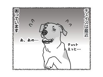 26072018_dog1.jpg