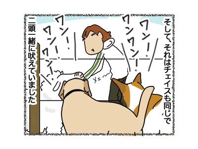 27062018_dog2.jpg