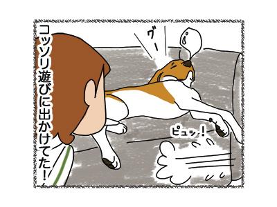 28062018_dog4.jpg