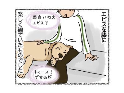 29062018_dog2.jpg