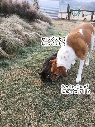 30062018_dog2.jpg
