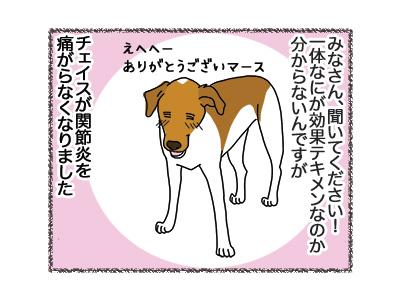 30072018_dog1.jpg
