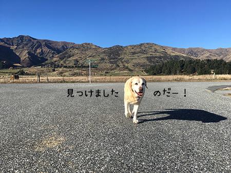 31072018_dog4.jpg