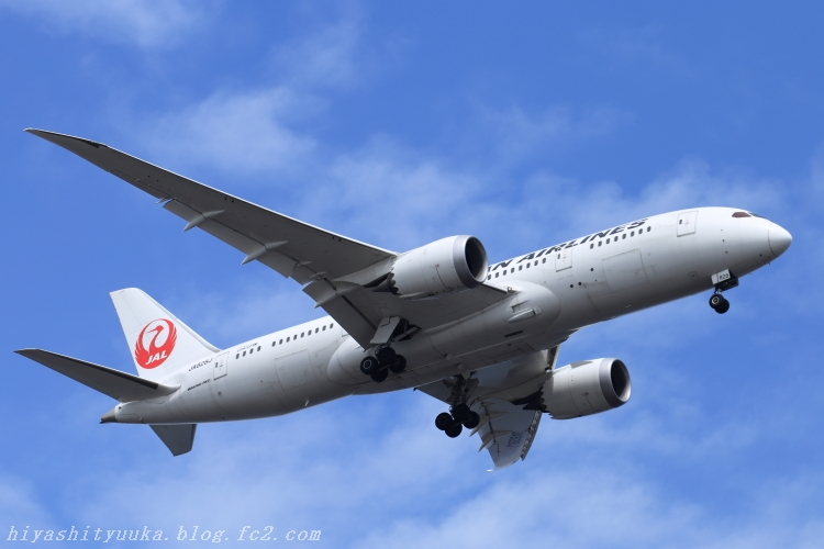 JAL 787-SN