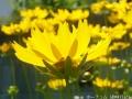 どんどん花を撮る10