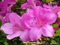 どんどん花を撮る11