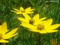 どんどん花を撮る12