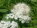 どんどん花を撮る13