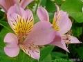 どんどん花を撮る14