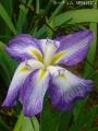 どんどん花を撮る15