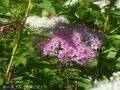どんどん花を撮る17