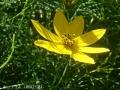 どんどん花を撮る18