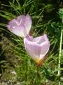 どんどん花を撮る19