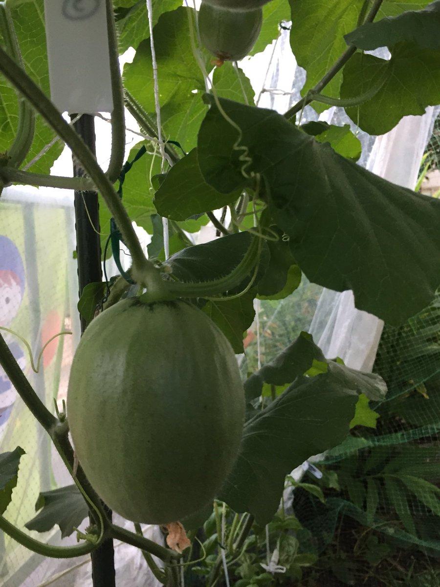 16 July melon