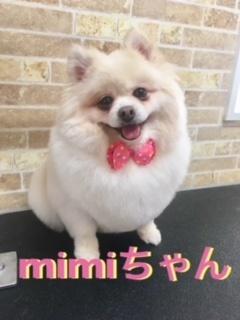 4月7日mimiちゃん