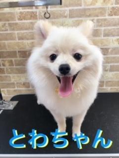 5月26日とわちゃん