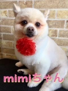 7月21日mimiちゃん