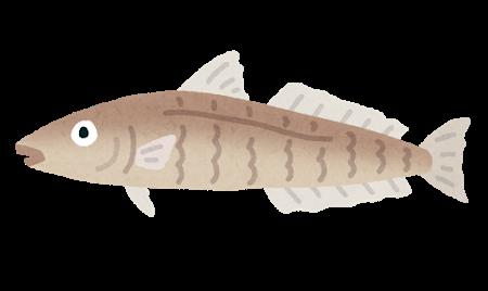 キス(魚)のイラスト