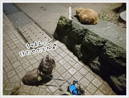 fc2_2018-06-15_02.jpg