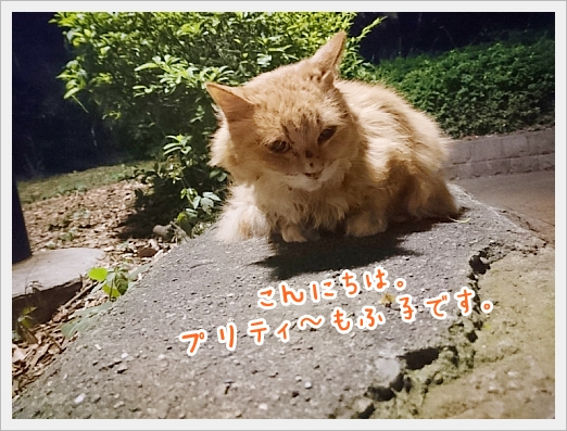 fc2_2018-06-15_04.jpg