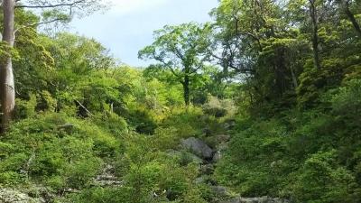 キャバマル 天城山