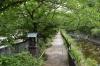 大堀花の道