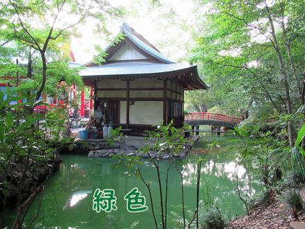 井の頭池が緑色