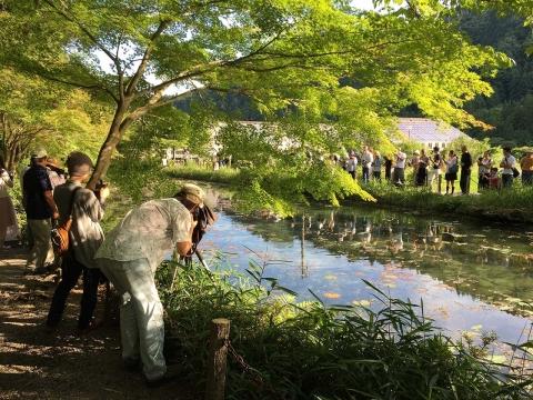 モネの池20180624(2)