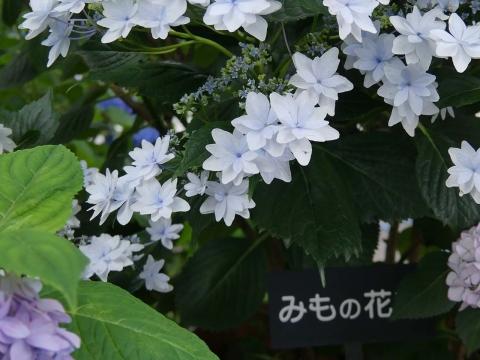 P1010706blog.jpg