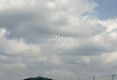 左用SAL仕様のkh-18、本日のベストショット!