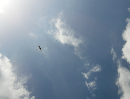 左用SAL仕様のkh-18、飛んでるとこ。