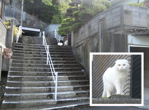ネコ発見。 白い・・・ね。
