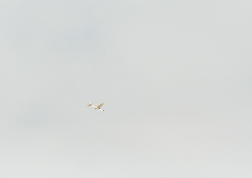 N-958、飛んでるトコ。 その2。
