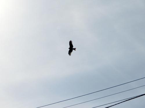 近くを飛んでるね。