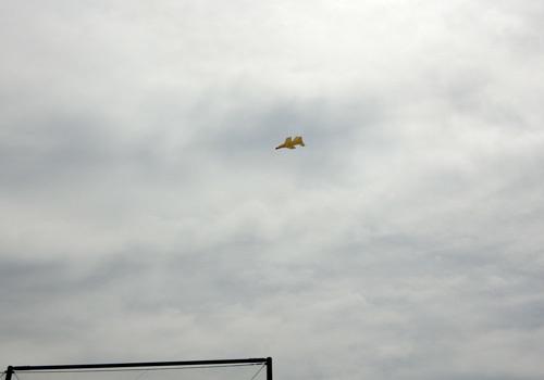 N-2050、飛んでるトコ。 その2。