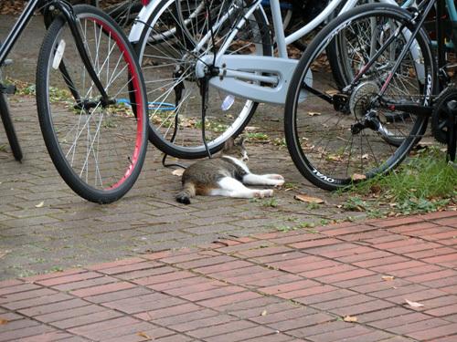 ネコ発見。 暑そうだね。