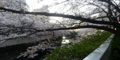 神田川の_convert_20180428110144