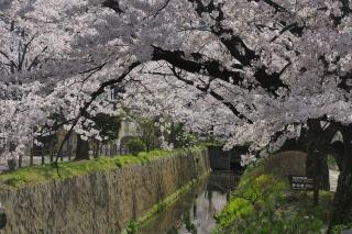 180331tetsugaku(17).jpg