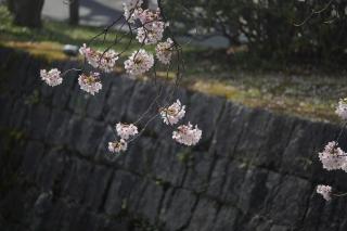 180331tetsugaku(18).jpg