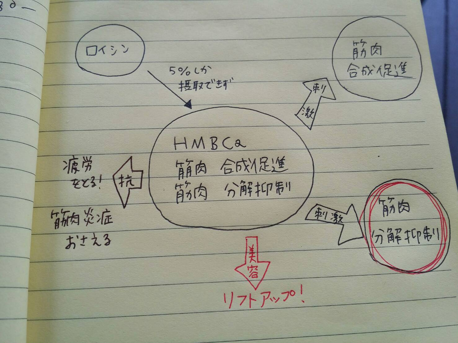 HMBca.jpg