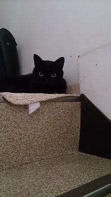 階段の上のミー太