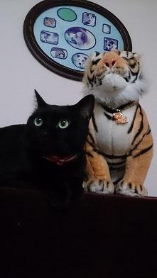 ミー太、トラちゃん、のりちゃん